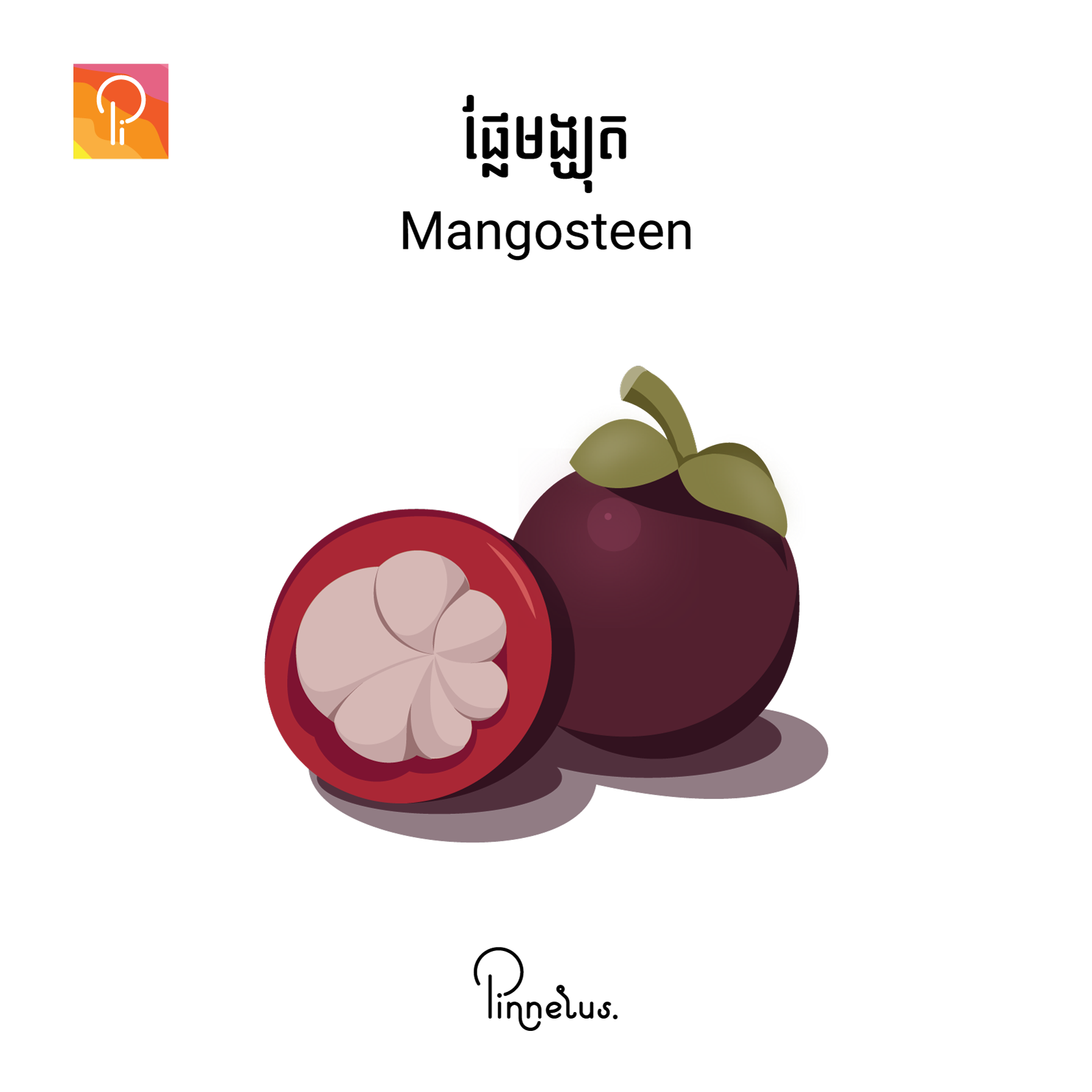 mangosteen - Mangosteen fruit square - Mangosteen