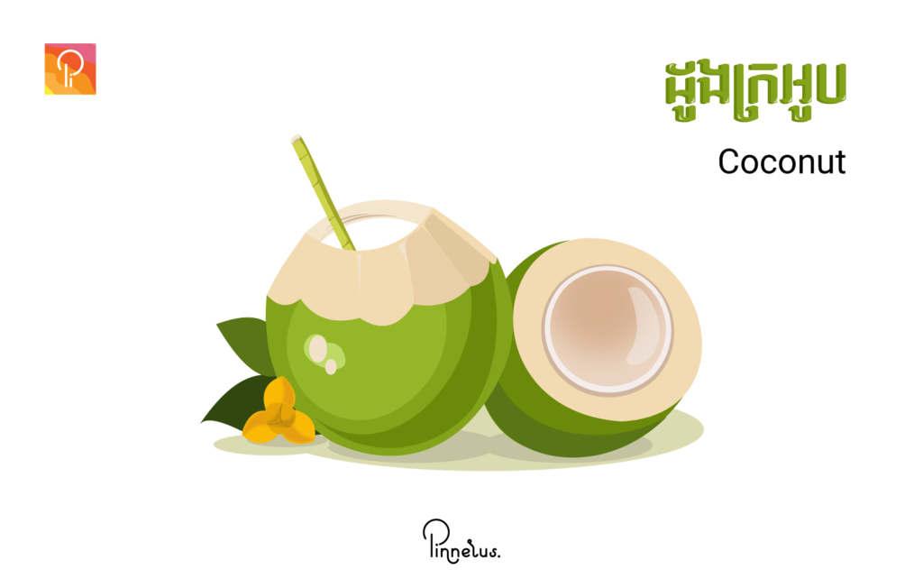 coconut coconut vector - coconut e1558120326633 1024x652 - Coconut vector