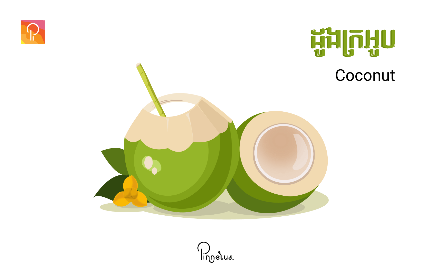 coconut coconut vector - coconut - Coconut vector